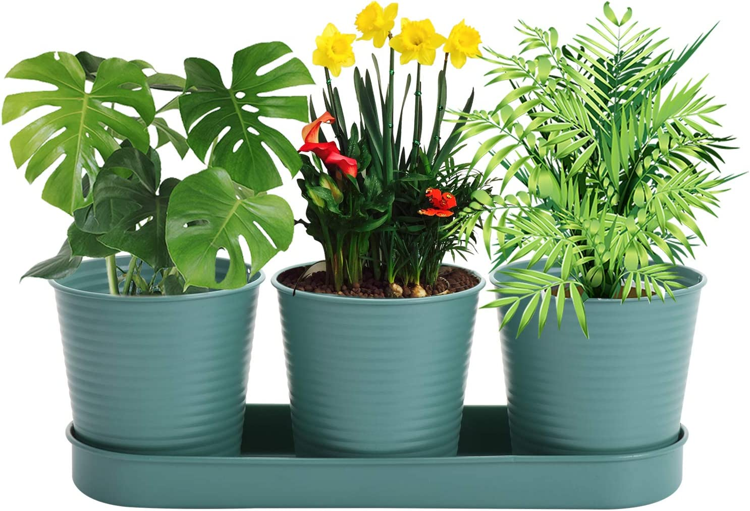 Herb Plant Pots Set, Succulent Pots with Tray and Drain Holes Indoor Garden Metal Planters for Kitchen Windowsill Garden Home Outdoor Decor