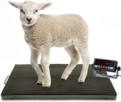 Small Livestock Scale 304 Stainless Steel Platter Animal Scale Milestone MS-700AS 38x20 Inches 700/×0.1lb Vet Scale Digital Animal Scale with PS-IN202 Indicator Mild Steel Frame