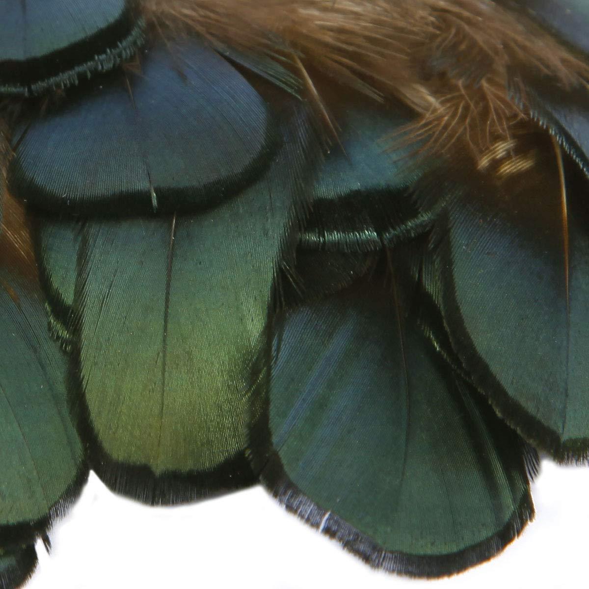 SurePromise Lot de 50//100 plumes de faisan naturelles pour d/écoration artisanale et couture