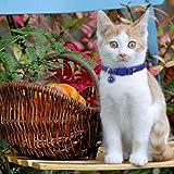 BoomBone Halloween Cat Collar Set of 2 Kitten Collars