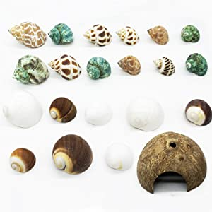 Alpurple 21 PCS Hermit Crab Growth Shells- Natural Turbo Sea Shells Turbo Shells Hermit Crab with Coconut Hide Reptile Hideouts for Beach Home Decor and Wedding Centerpieces