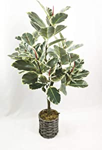 WANGYANG Artificial Rubber Tree Plant Faux Tropical Ficus Elastica Tree Used for Home Office Decoration 1 Pack