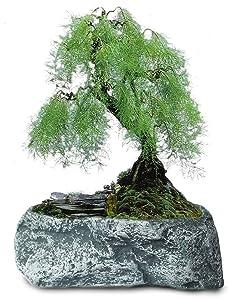 Dahlia Stone Like Handmade Concrete Succulent Planter/Plant Pot/Flower Pot/Bonsai Pot, 2