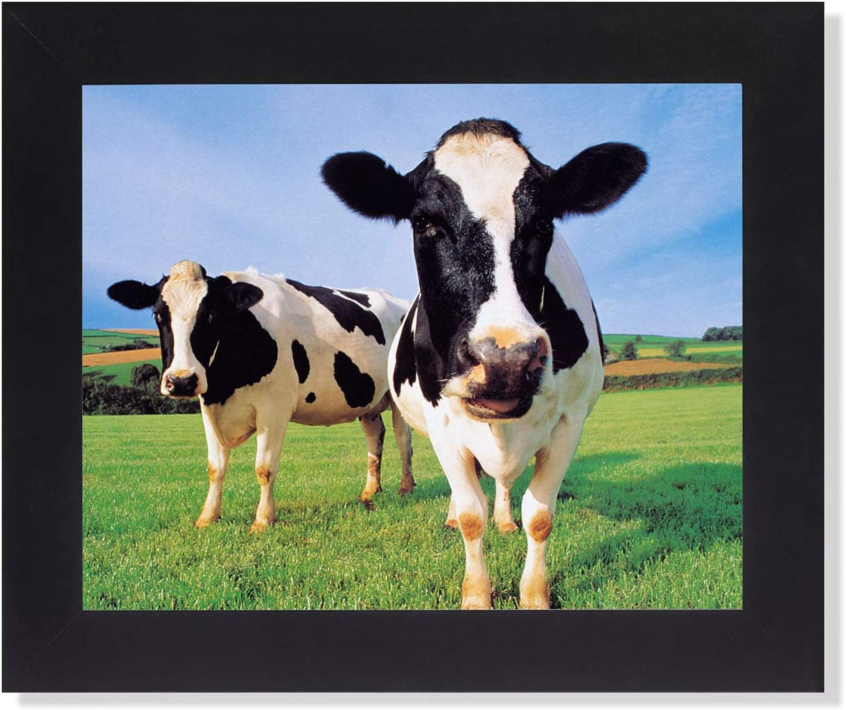 Two Holstein Cows Standing In Grass Farm Photo Wall Picture Framed Art Print Posters Prints