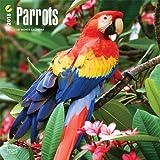 Parrots - Papageien 2018 - 18-Monatskalender: Original BrownTrout-Kalender [Mehrsprachig] [Kalender] (Wall-Kalender)