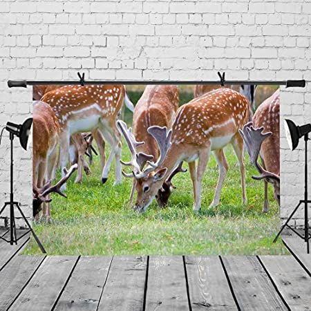 LYLYCTY 7x5ft Spotted Deer Backdrop Grassland Spotted Deer Group Photography Backdrop Photo Studio Background Props LYXC073
