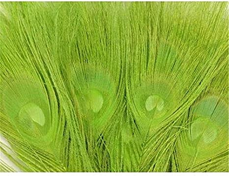 US Seller 25 B Quality Dyed Lime Peacock Eye Feather Stems 12-14/""