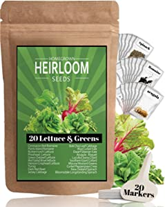Lettuce and Greens Seed Vault - Non-GMO Seeds for Planting Indoor or Outdoor - Kale, Spinach, Butter, Oak, Romaine Bibb & More - Hydroponic Home Garden Seeds (20 Variety)