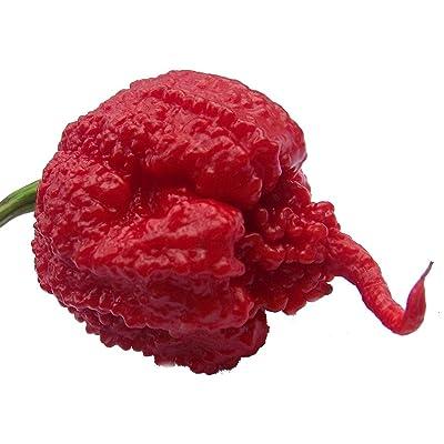 Carolina Reaper Pepper - 3 Live Plants - Hottest Pepper in The Universe : Garden & Outdoor