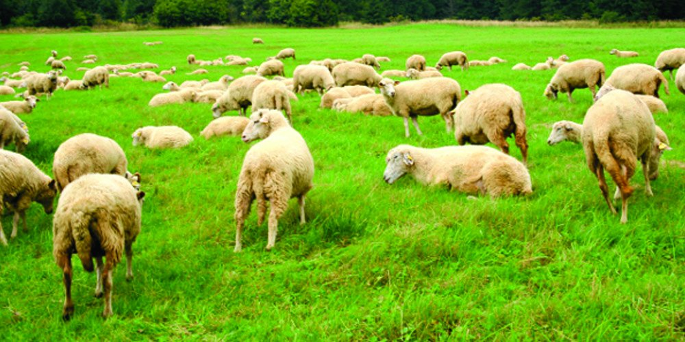 Nature's Seed PB-PSWS-1.5-A 1.5 Acre Pacific Southwest Sheep Pasture Blend