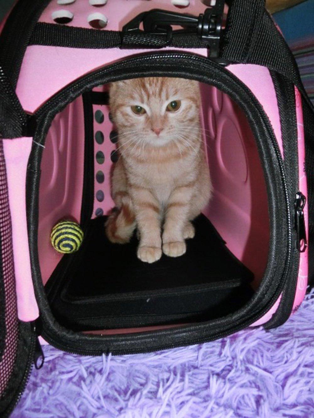 Itian Portatile Traspirante Pieghevole Pet Carrier Bag Animale Domestico Borsa per il Trasporto Cucciolo Piccolo Gatto Cane Borsetta Giallastro