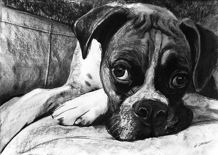 Amazon Com Boxer Dog Art Boxer Dog Gift Boxer Dog Artwork