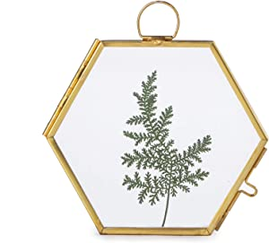Small Wall Hanging Brass Hexagon Glass Artwork Certificate Photo Picture Display Frame Geometric Ornament Plant Specimen Clip Modern Vertical Decor Card Holder 3.5 inchs, Glass frame only