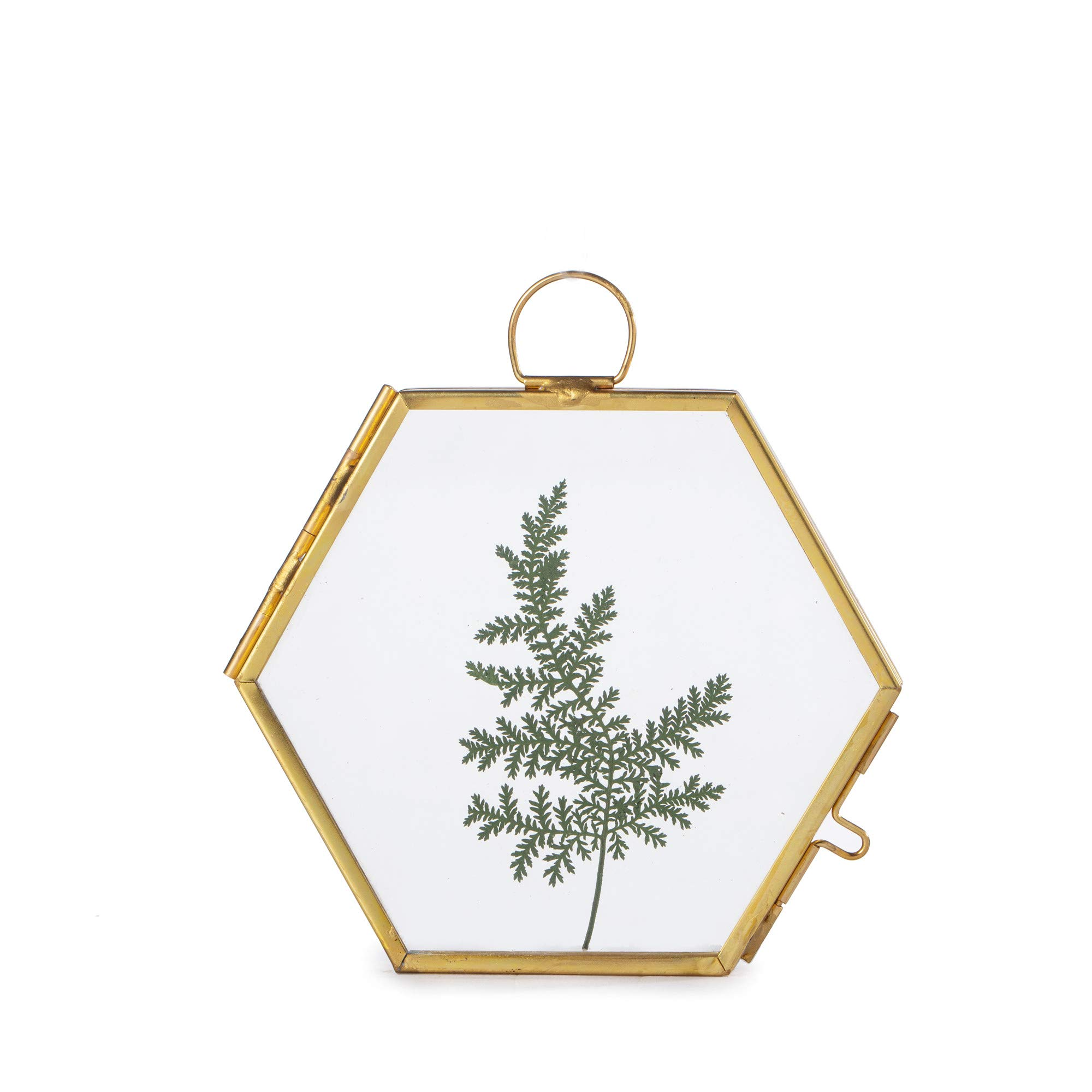 NCYP Small Wall Hanging Brass Hexagon Glass Artwork Certificate Photo Picture Display Frame Geometric Ornament Plant Specimen Clip Modern Vertical Decor Card Holder 3.5 inchs by NCYP