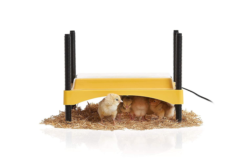 Brinsea EcoGlow Brooder for Chicks or Ducklings 71NpZ9Rjj0L._SL1500_