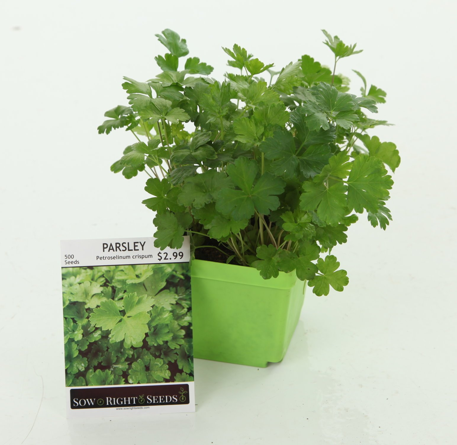 Indoor Herb Garden Starter Kit - Full Size Seed Packets of Basil, Chives, Cilantro, Oregano & Parsley - Everything You Need to Grow Herbs in Your Kitchen - Soil, Reusable Pots, Trays, Plant Markers, by Right Hardware (Image #6)