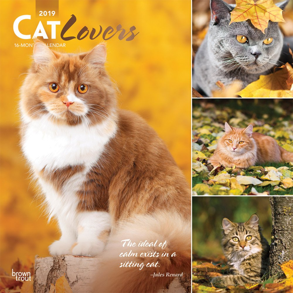 Cat Lovers 2019 12 x 12 Inch Monthly Square Wall Calendar with Foil Stamped Cover, Animals Domestic Cats (Multilingual Edition)