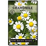 Sow Right Seeds - Roman Chamomile Seeds for Planting - Non-GMO Heirloom Seeds; Instructions to Plant and Grow an Herbal Tea G