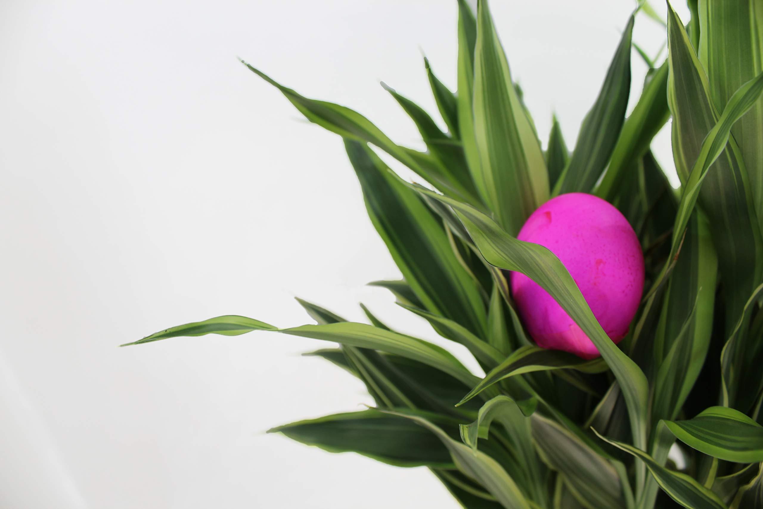 Confetti Eggs Cascarones, Multicolored, 240 Count, Party Game for Easter, San Antonio Fiesta Week, Cinco de Mayo or Birthday Party by Pinatas (Image #6)