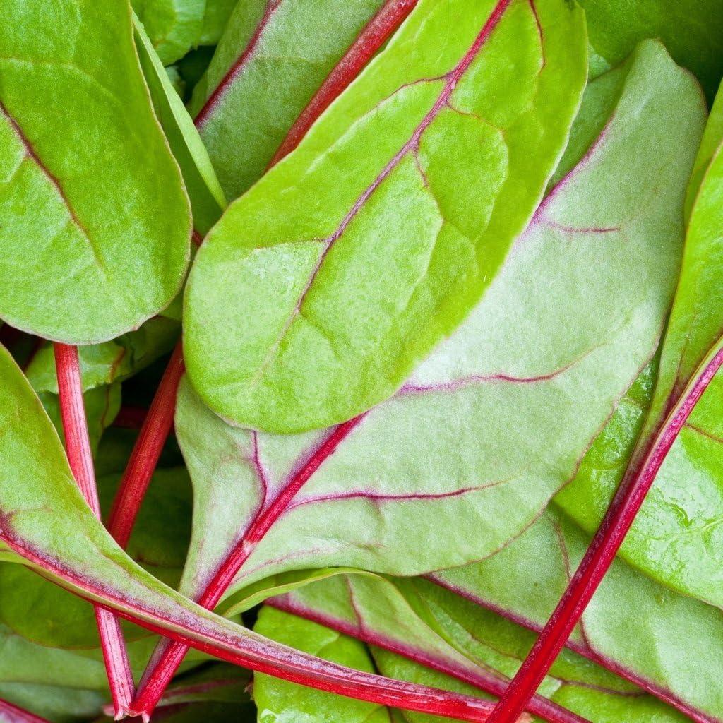 Groseeds Vegetable Seeds Spinach Red Kitten F1 V Spi 01 350 Seeds Minimum Per Packet Amazon Co Uk Garden Outdoors