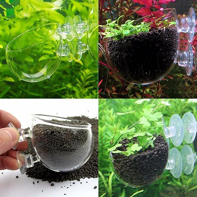 Mini acuario acuario acuático cristal maceta soporte de vaso para acuario paisaje con costuras y agujeros: Amazon.es: Productos para mascotas