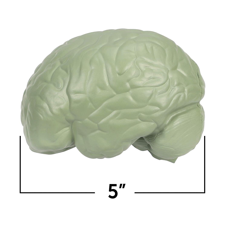 Amazon.com: Learning Resources, maqueta del cerebro con ...