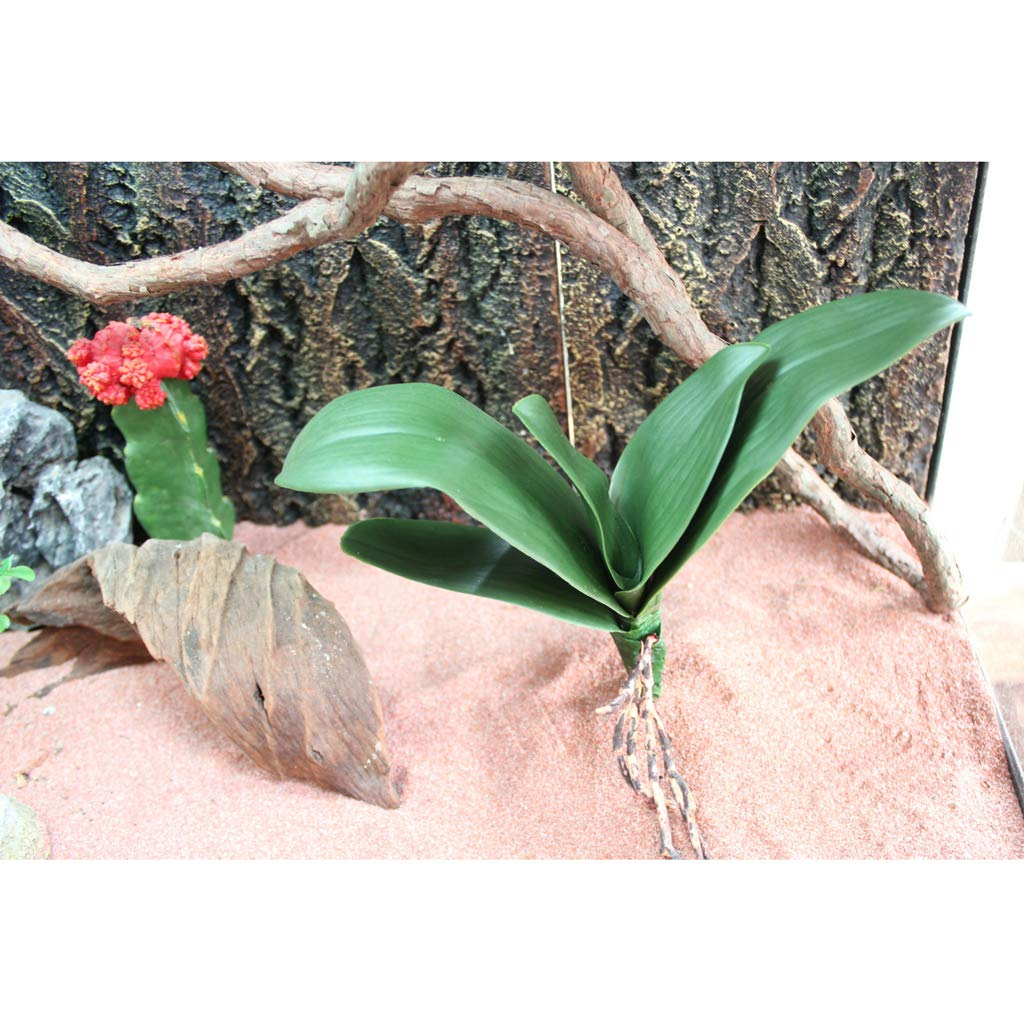 B Blesiya Plastic Terrarium Cactus Plant Animals Habitat for Amphibian Reptile by B Blesiya (Image #10)