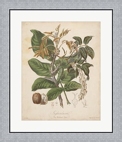 Amazon.com: Botanicals VI by Elizabeth Twining Framed Art Print Wall ...