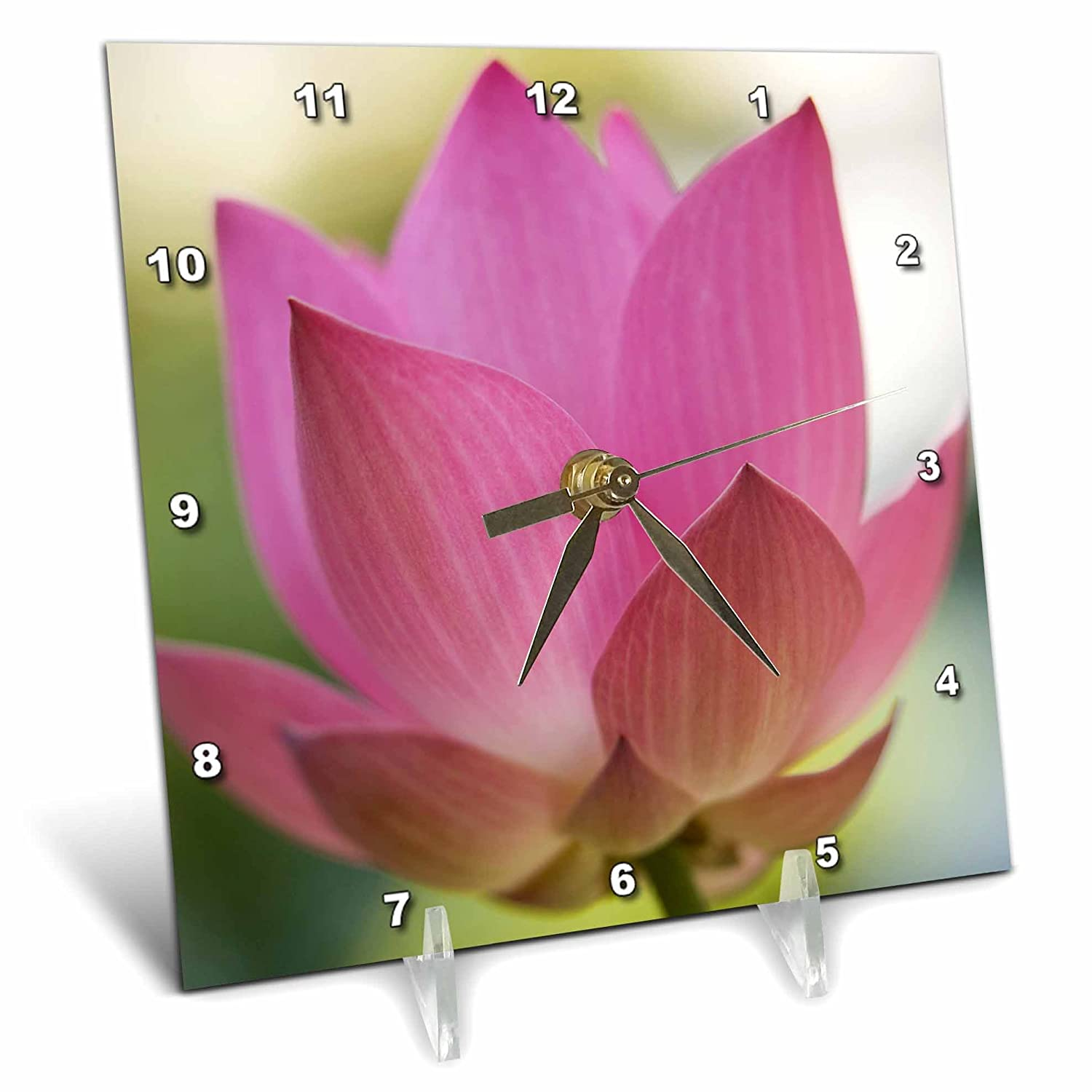 6 by 6-Inch Bangkok 3dRose dc/_72124/_1 Bloom of Lotus Flower Thailand-AS36 RYO0110-Russell Young-Desk Clock