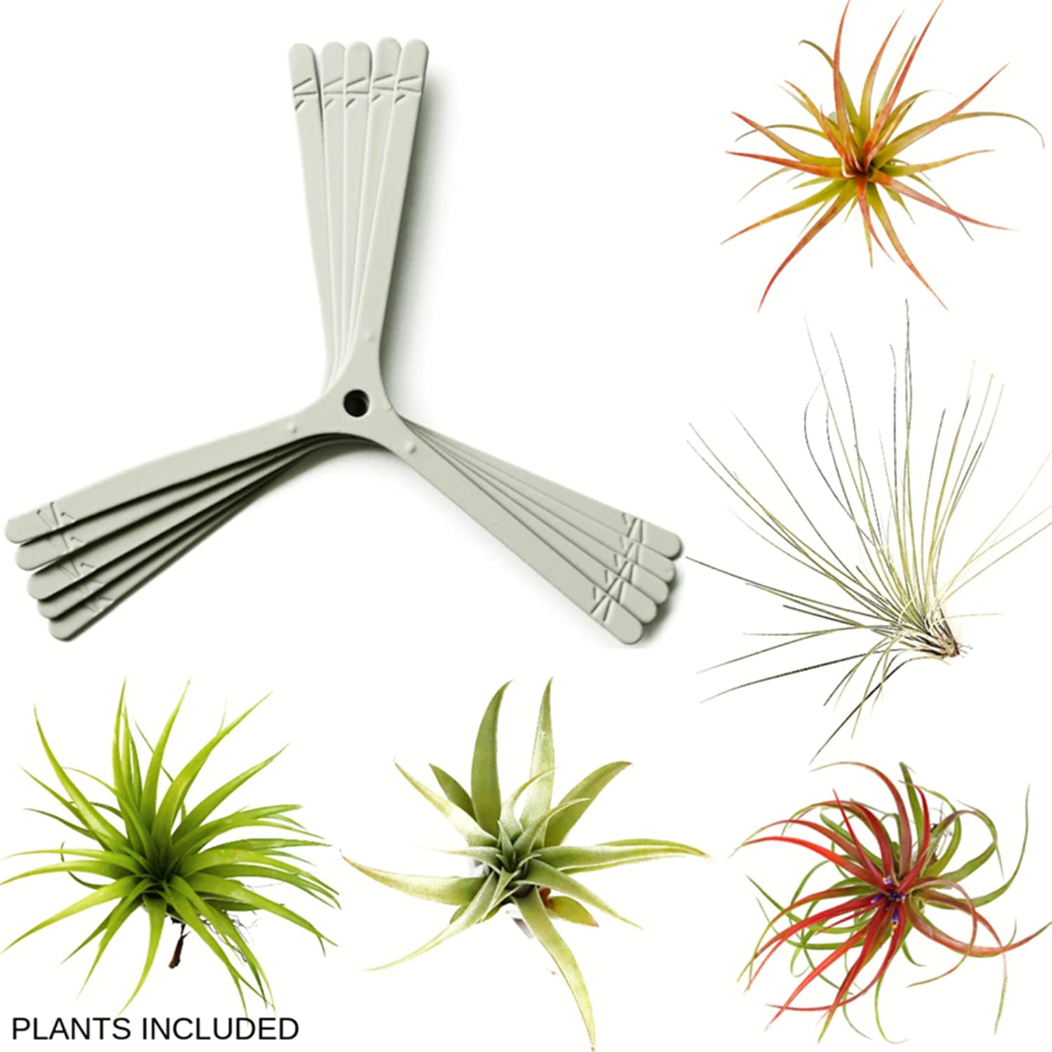 ArtAK 10 Pcs Wall Planter Kit 5 Hanging Air Plant Holder Air Knots 5 Large Tillandsia Live Air Plants Houseplants Home Decor Accents Vertical Garden Terrarium Indoors and Outdoors Grey