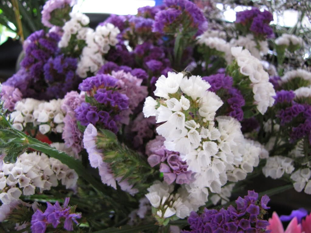 Amazon 50 purple statice sea lavender limonium sinuatum amazon 50 purple statice sea lavender limonium sinuatum flower seeds comb sh flowering plants garden outdoor mightylinksfo Images