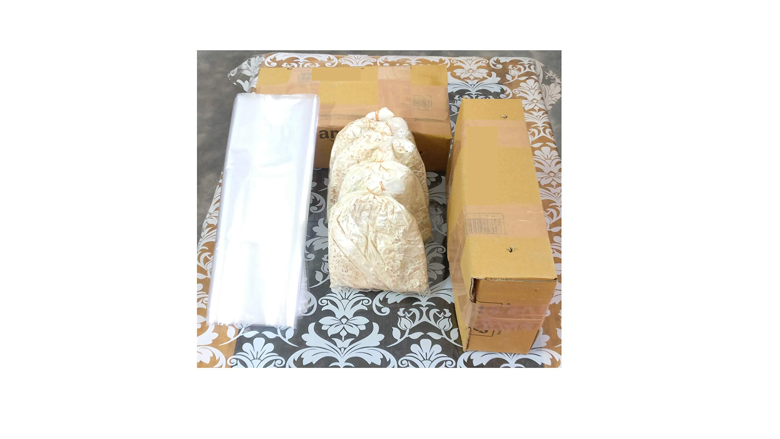 BM MUSHROOM Florida Oyster Spawn, 1kg Plus 5 PP Bags