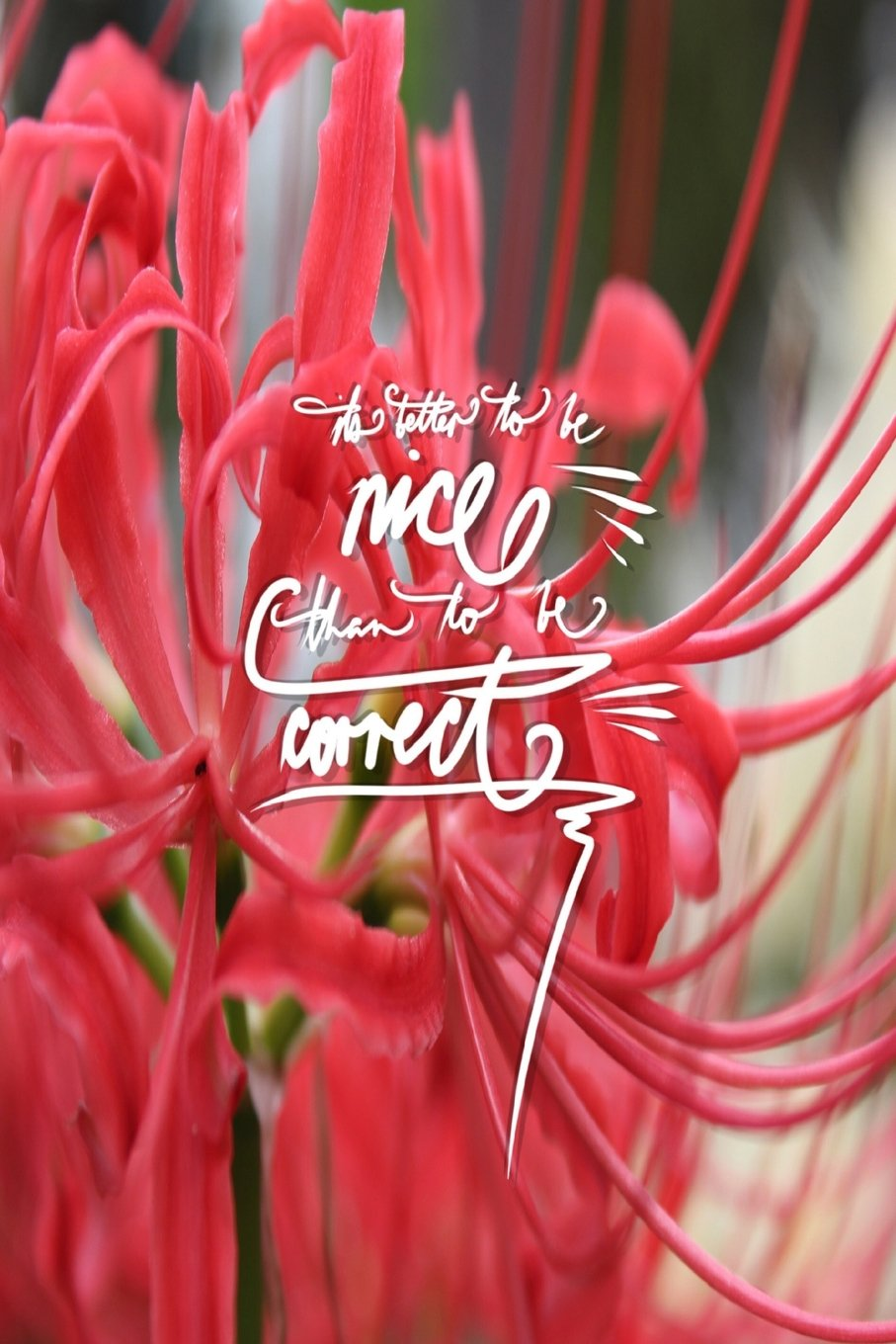 Download Its better to be nice than to be correct: 6x9 Inch Lined Journal/Notebook - Red spider lilly, red, flower, Colorful, Nature, Calligraphy Art with photography, Gift idea PDF