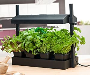 SunBlaster SL1600198 Micro Grow Light Garden, Black
