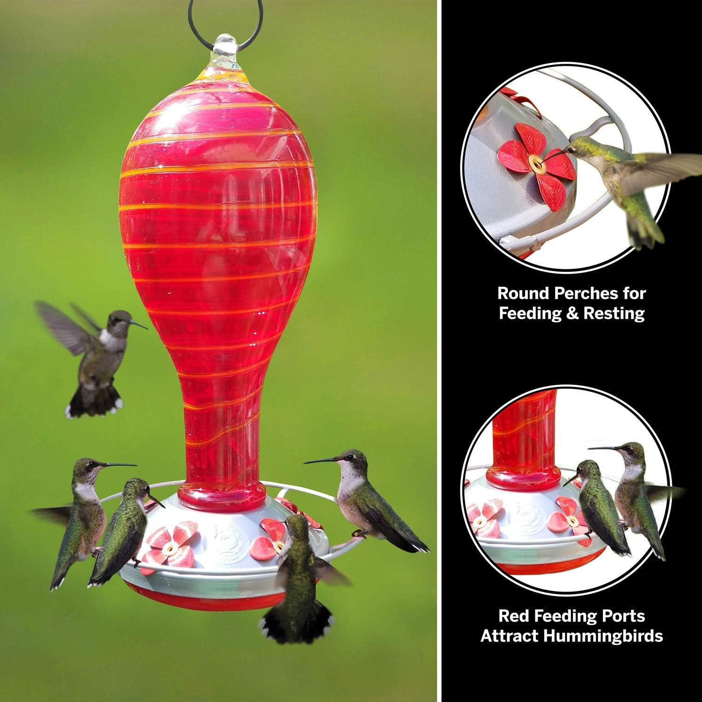 Basket of Geraniums and Hummingbirds Hummingbird Gourd