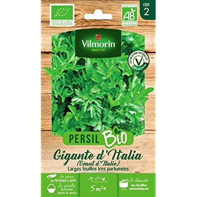 Seed Bag Green Giant Parsley Vilmorin : Garden & Outdoor