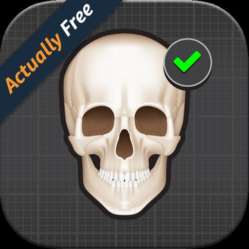 Human Skeleton: Bones for beginners (Bones Of Human Body)
