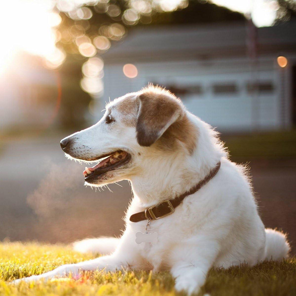Siebenmorgen Knochen Personalisiert Haustier ID Tag Hund Tag mit Gravur Service Hundemarke Anhaenger aus Edelstahl