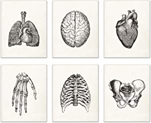 Vintage Human Anatomy Prints Set of 6 (8 inches x 10 inches) Wall Decor Matte Photos