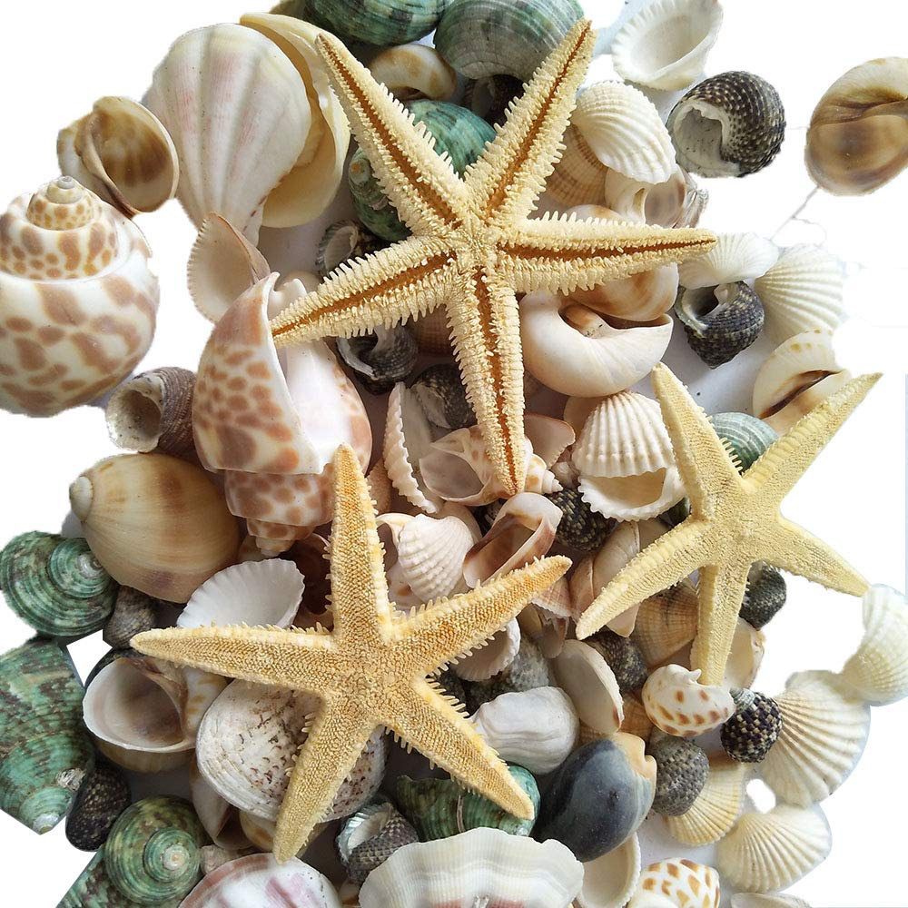 YEJI 80pcs Home Decorations Sea Shells Mixed Beach Seashells, Colorful Natural Seashells for Party Wedding Decor, DIY Crafts