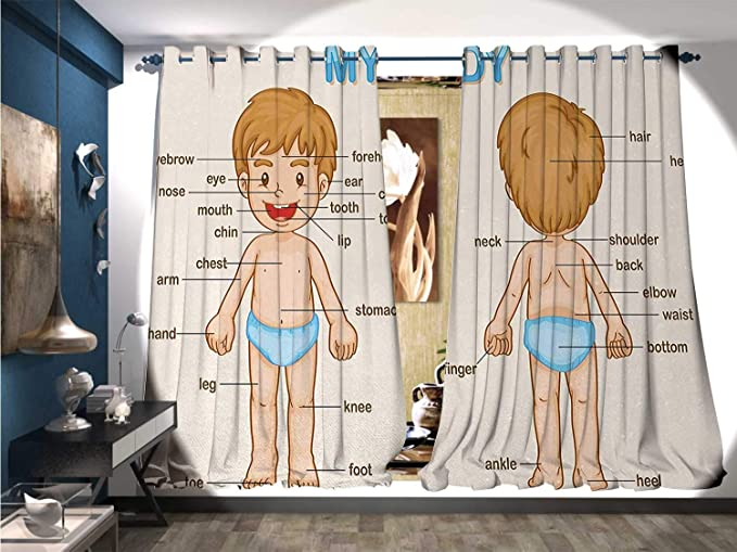 Amazon com: Window Curtain Fabric Illustration of The Parts of The