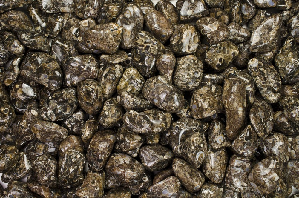 Fantasia Materials: 11 lbs Tumbled Turitella Agate ''AA'' Grade Stones from India - Large 1'' Bulk Natural Polished Gemstone Supplies for Crafts, Reiki, Wicca and Energy Crystal HealingWholesale Lot