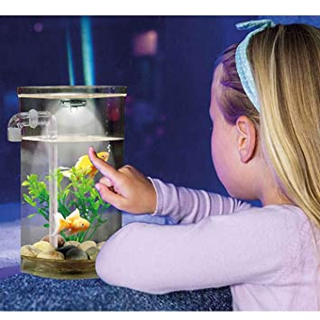 Wonder Fish Pecera Acuario autolimpiable: Amazon.es: Productos para ...