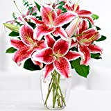 ProFlowers - 10 Count Pink Fragrant Stargazer Lilies w/Free Clear Vase - Flowers