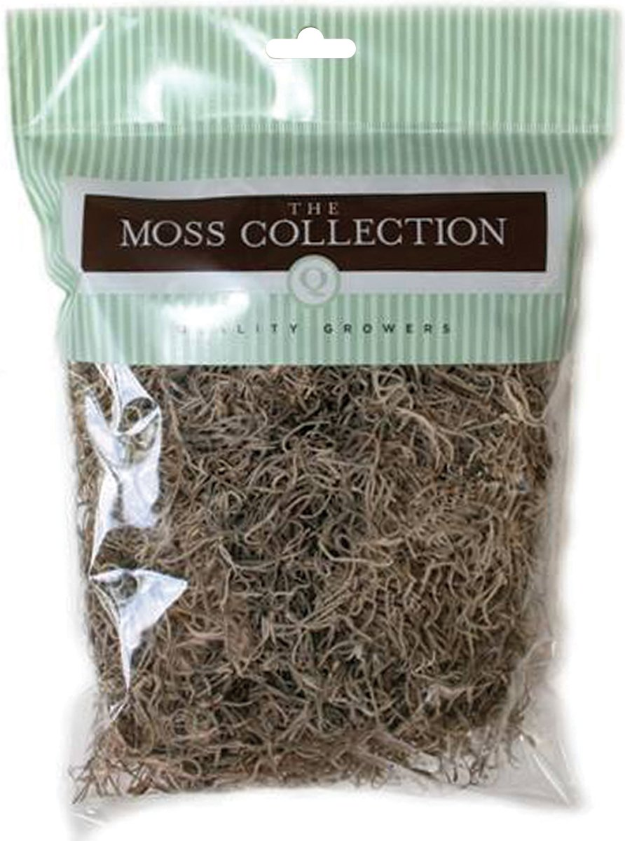 Quality Growers Preserved Spanish Moss 108.5 Cubic Inches-Apple Green Notions - In Network QG1542