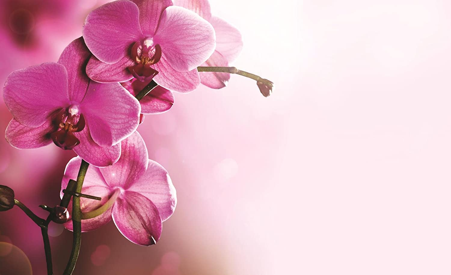 Soft Pink Orchid Flowers Wallpaper Mural Amazoncom