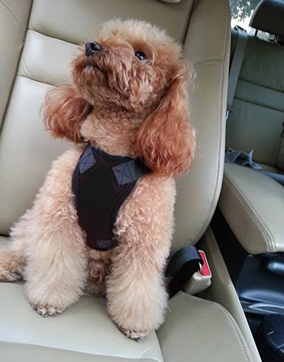 Arnés de seguridad para llevar mascotas en el coche, acolchado y ajustable, con anclaje al cinturón de seguridad, ideal para perros y gatos pequeños, ...