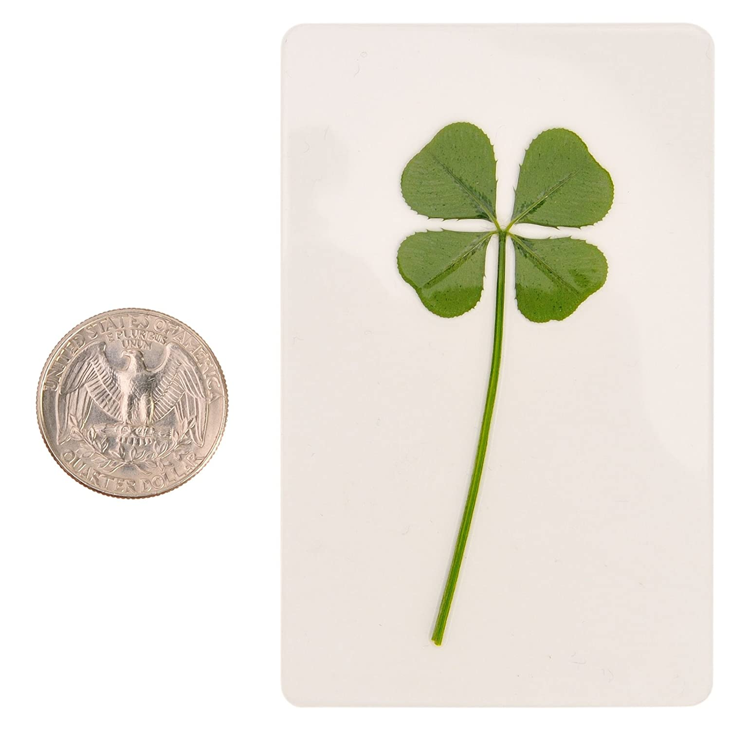 Saint Patrics Day Bookmarks Irish Shamrock Good Luck Charm for Smartphone Wallet Case Amulet Purse Coating Gift Thanks Card M ARTMART Genuine Real 4 Four-Leaf Green Clover St