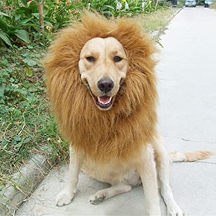 d670ae92a4c Lion Mane Costume for Dog,Medium/Large Sized Dog - Soft Brown Fluffy Warm  Polyester Wig . Lion Wig for Dog Large Pet Festival Party Fancy Hair Dog ...