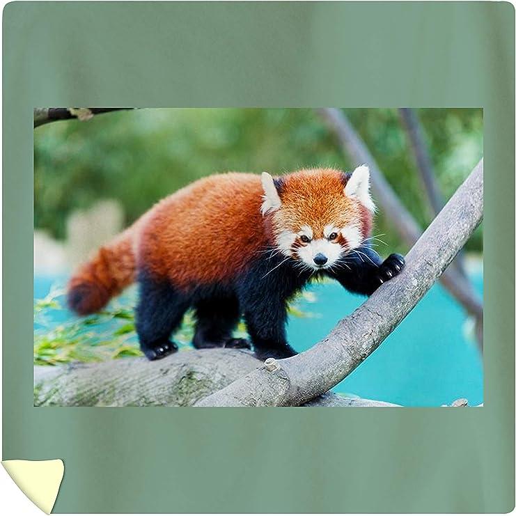 Amazon Com Lantern Press Cute Red Panda Baby A 9003390 88x88 Queen Microfiber Duvet Cover Posters Prints